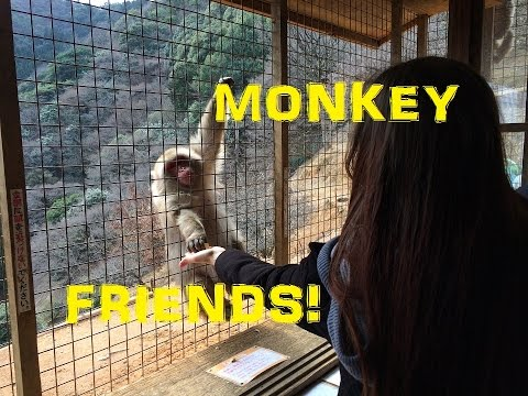 TRAVEL DIARY: Making new Monkey Friends in Kyoto