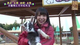 白間美瑠の子牛のミルクやり「動物とふれあいたい」#3 YNN