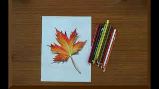 Maple Leaf Color Pencil Drawing
