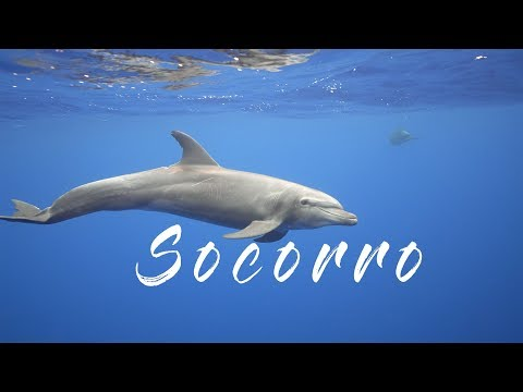 Socorro 2018 - Diving with Giant Manta Rays, Dolphins and Sharks 4K - Mexico