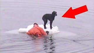 10 Спасений животных снятых на камеру
