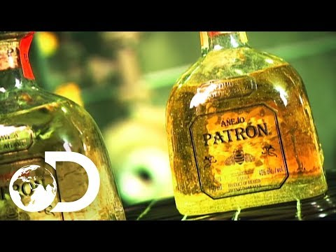 TEQUILA | How It's Made