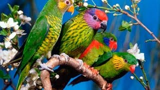 Мини уборка клетки попугая .