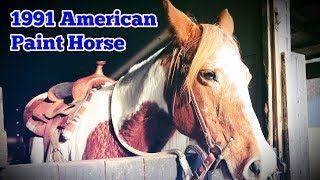 1991 American Paint Horse: Regular Car Reviews