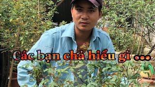 GÓC TƯ VẤN TRỒNG HOA HỒNG THÂN GỖ TREE ROSE  #tuvantronghoa #hoahongleo #hoahongdep.chuẩn garden tv