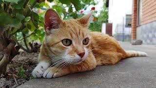Relaxing Cat Video 162