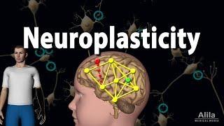 Neuroplasticity, Animation.
