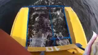 Плывущий катамаран   съёмка задней части, вид сверху