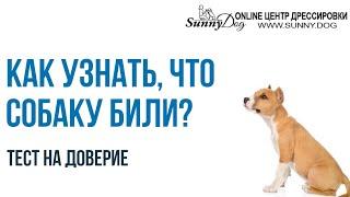 Как понять что собаку били? Простой тест - доверяет ли вам ваша собака