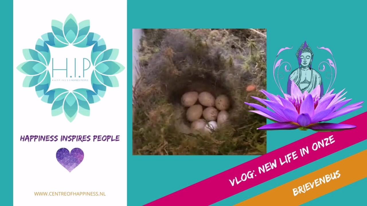 Vlog: NEW LIFE - Siobhan Welling