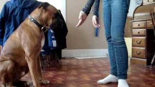 Smart Boxer does awesome tricks