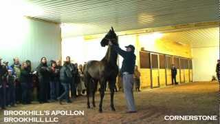 CORNERSTONE - All American Cup Stallion Tour 2012