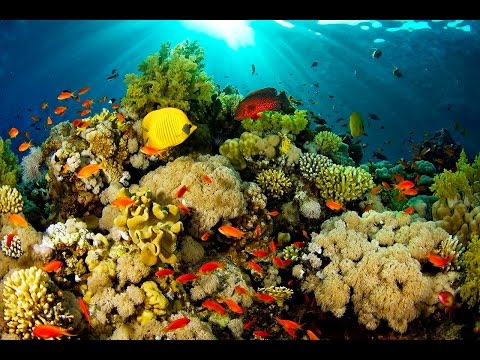 Indonesia Best Diving Destinations in the World