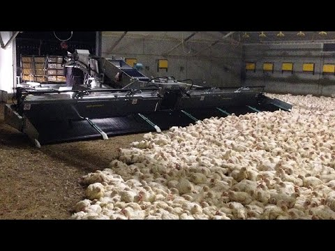 This modern farming machines saved million dollars for farmer. Incredible chicken farming technology