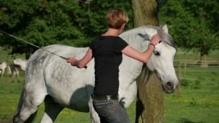 Liberty Groundwork – the foundation for communication between you and your horse