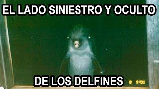 El Lado Siniestro y Oculto de los Delfines.