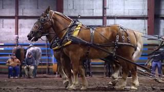 Maritime Horse Pull 2017