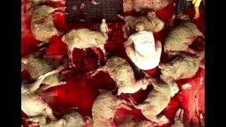 Schau nicht weg! Schluss mit Tierquälerei!