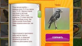 """В мире животных 56, 57, 58, 59, 60 уровень. Игра """"В мире животных"""" в Одноклассниках."""