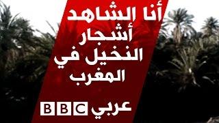 أنا الشاهد: أسباب تقلص أعداد أشجار النخيل في المغرب
