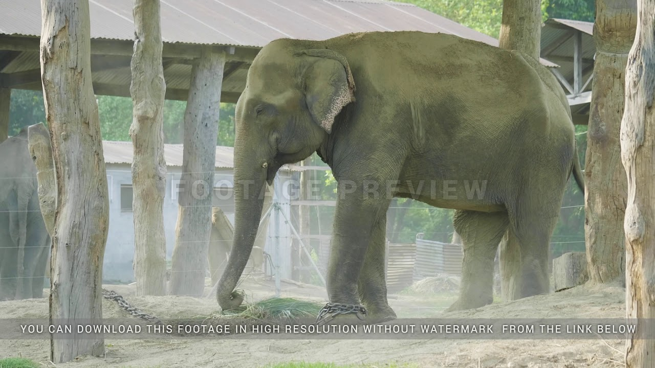 Elephants takes shower of dust in the farm of national park Chitwan, Nepal