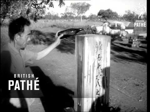 Pearling Industry In Australia 1966