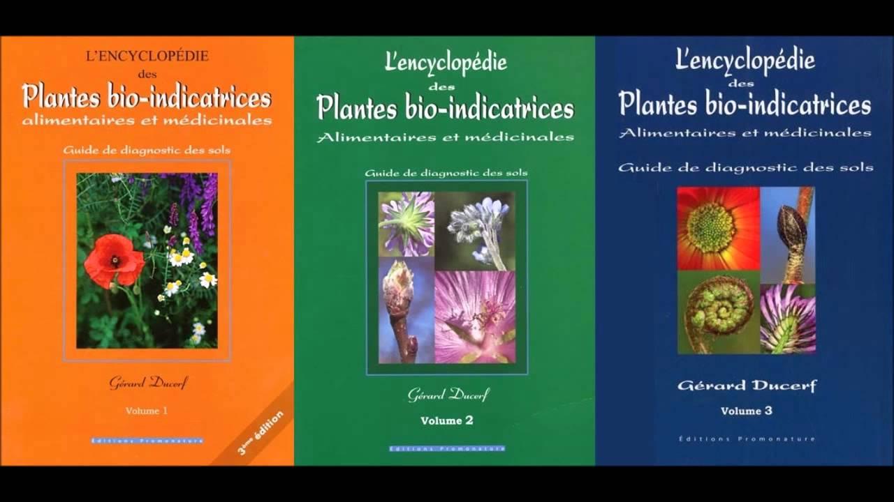 Les plantes bio-indicatrices - YouTube