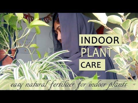 indoor-plant-care-in-malayalam-|-money-plant-&-lucky-bamboo-ഞങ്ങിനെ-ഹെൽത്തി-ആയി-വളർത്താം