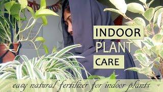 Indoor plant care in malayalam |  money plant & lucky bamboo എങ്ങിനെ ഹെൽത്തി ആയി വളർത്താം