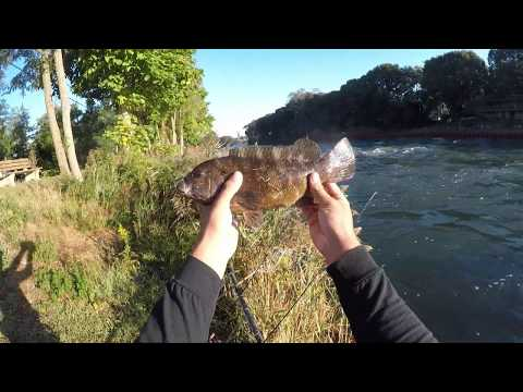Blackfishing (Tautog) In New Jersey River