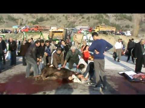 Kurban kesimi KKB 5 women's cameraman. cow beef is cut.