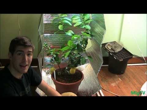 How To Make the Cheapest DIY Grow Tent for Indoor Plants