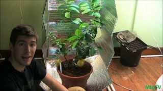 How To Make the Cheapest DIY Grow Tent for Indoor Plants(, 2013-11-02T21:47:11.000Z)