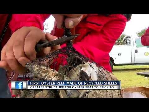 Reefs made from recycled oyster shells expected to boost marine life along Nature Coast