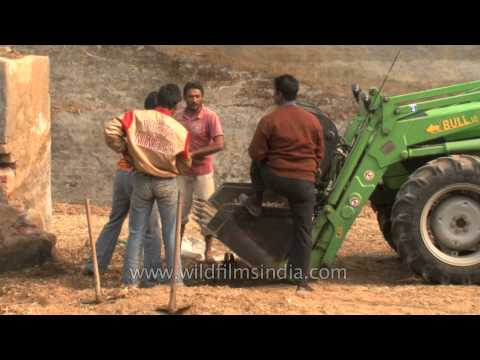 Men loading left out silage in bulldozer