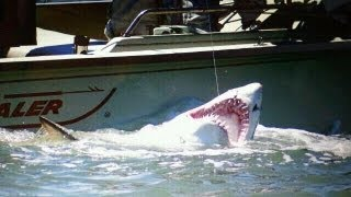 BIG 9 Foot Sand Tiger Shark Caught in the Delaware Bay  - Shark Fishing 2011