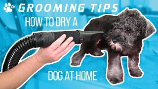 How to dry a dog at home | Grooming Tips  TRANSGROOM