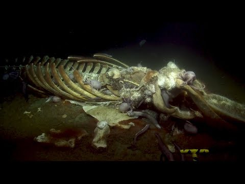Spookiest Deep Sea Sights of the 2019 Nautilus Expedition | Nautilus Live