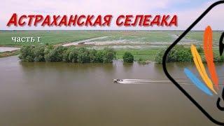 АСТРАХАНСКАЯ СЕЛЕДКА ч 1