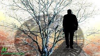 Alzheimerova choroba, měď a nasycený tuk