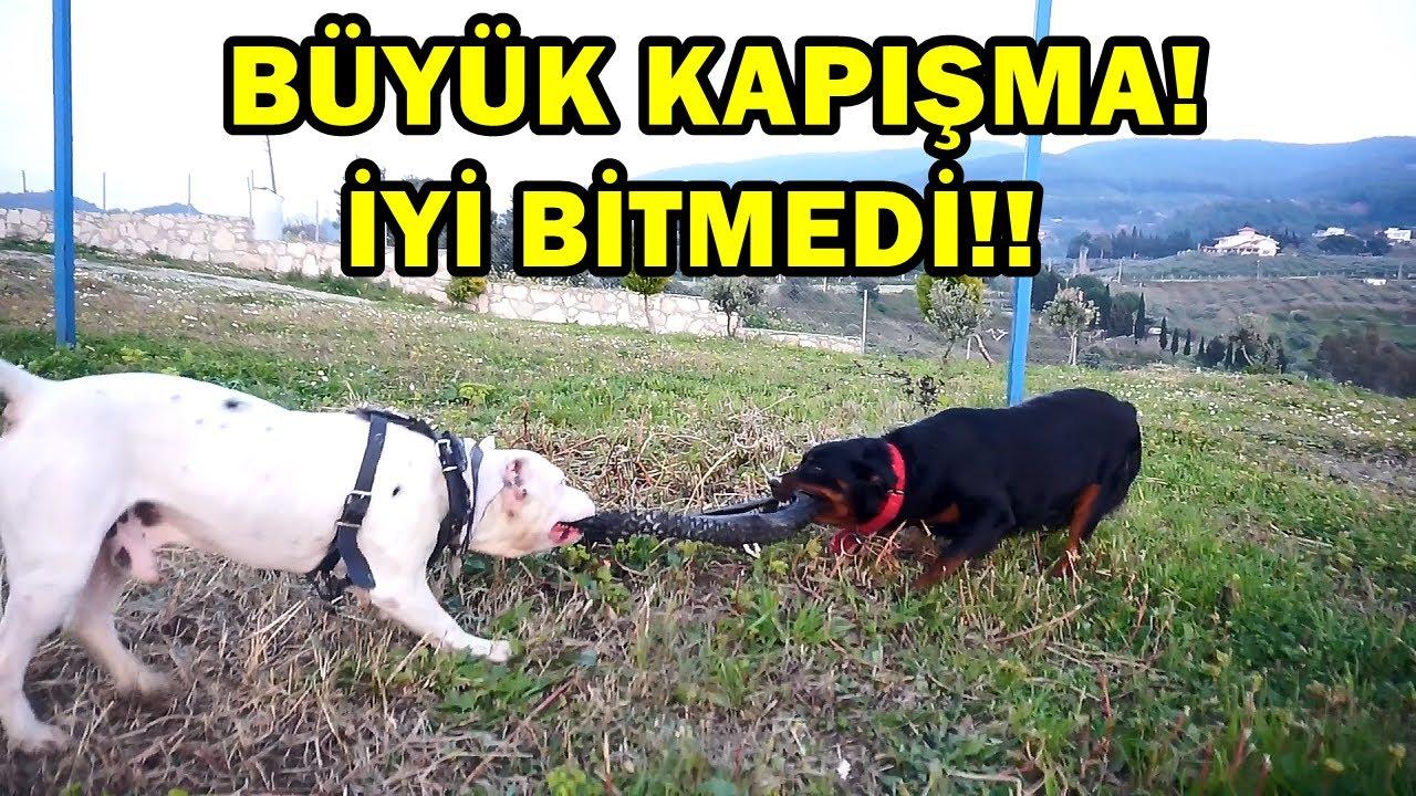 TYSON VS MARLA HANGİSİ DAHA GÜÇLÜ? - ELİMDEN ISIRILDIM!!