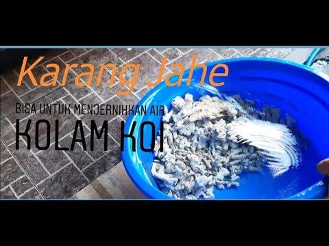 filter kolam ikan koi dari karang jahe - youtube
