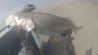 Pesca de Corvinas en Iquique Agosto 2014
