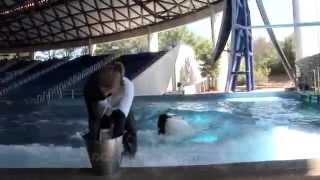 Seaworld park oriando florida | dolphine |san diego zoo panda cam
