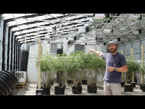 HighYield™ Commercial Cannabis Greenhouse in Central Michigan Part Two