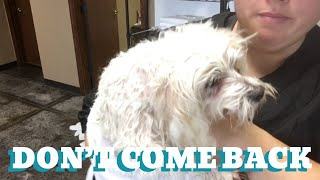 TOLD THEM NOT TO COME BACK | DIFFICULT MALTESE