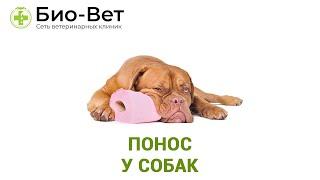 Понос у собак. Ветеринарная клиника Био-Вет.
