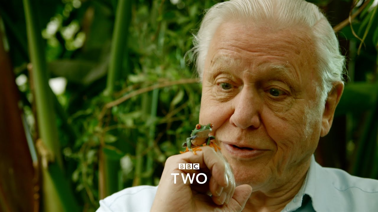 Natural World: Attenborough's Fabulous Frogs - Trailer ...