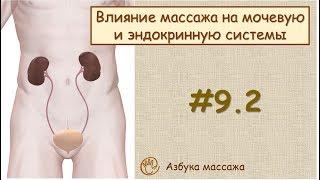 Влияние массажа на мочевую и эндокринную системы | Урок 9, часть 2 | Уроки массажа