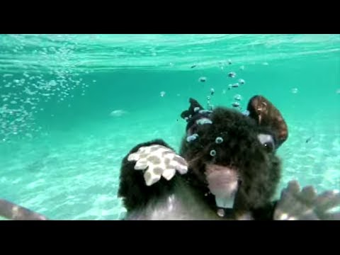 Iggy Azalea - Trouble ft. Jennifer Hudson from YouTube · Duration:  3 minutes 1 seconds